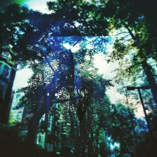 Take a look behind the veil Soullessphotography Vancouver Downtown Instagram Phoneography EyeEm Autodeskpixlr Pixlr Park