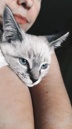 Pets Domestic Cat One Animal Mammal Domestic Animals Animal Themes Real People Close-up Feline Looking At Camera Pet Owner Portrait One Person Human Hand Human Body Part Kitten Kitty EyeEmNewHere First Eyeem Photo