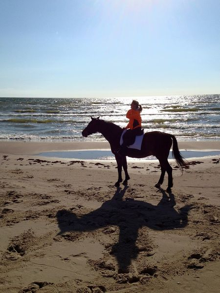 Horse Full Length Sea Sand Beach People One Animal Nature Horizon Over Water Sport Day Outdoors Domestic Animals Adventure EyeEmNewHere Nature Sky Landscape EyeEm Masterclass EyeEmBestPics Beauty In Nature Eye Em Nature Lover Horselove EyeEmbestshots Eyeemphotography
