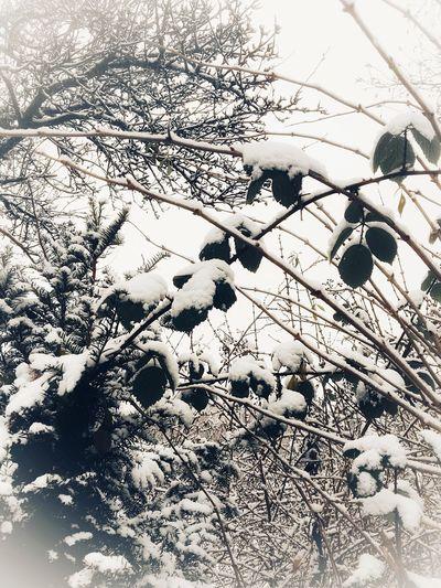 Snow EyeEm