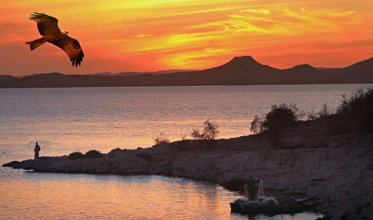 Egypt Sunset Silhouettes Animal Animal Themes Animal Wildlife Animals In The Wild Beauty In Nature Bird Cloud - Sky Flying Lake Nasser Mid-air Mountain Nature Orange Color Outdoors Scenics - Nature Sea Sky Sunset Water