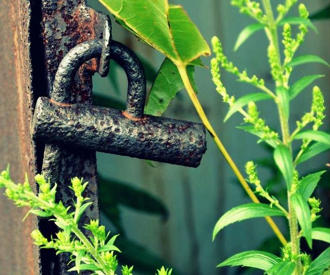 Beauty In Nature Close-up Focus On Foreground Green Green Color Growth Leaf Nature No People Plant Scenics Tranquility Weathered