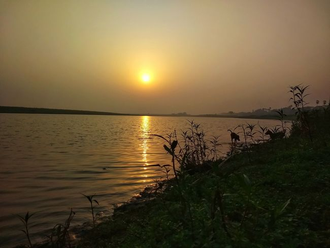 Ganga River Gangaghat Ganges Approachingsun Earlymorning  Sunrise Sunshine River Plants And Flowers Plantation Green Leaves Dogs Playing  Calm Water Reflections In The Water Nature_collection Naturelovers Naturescapes Landscape Outdoors Sunlight Scenics Sky Horizon Over Water Beauty In Nature Sunset