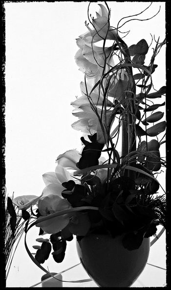 Flowers Flower Collection Taking Photos Shadows & Light Synthesis Blackandwhite Photography Black And White Photography Orhids