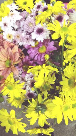Flower Floresdocampo