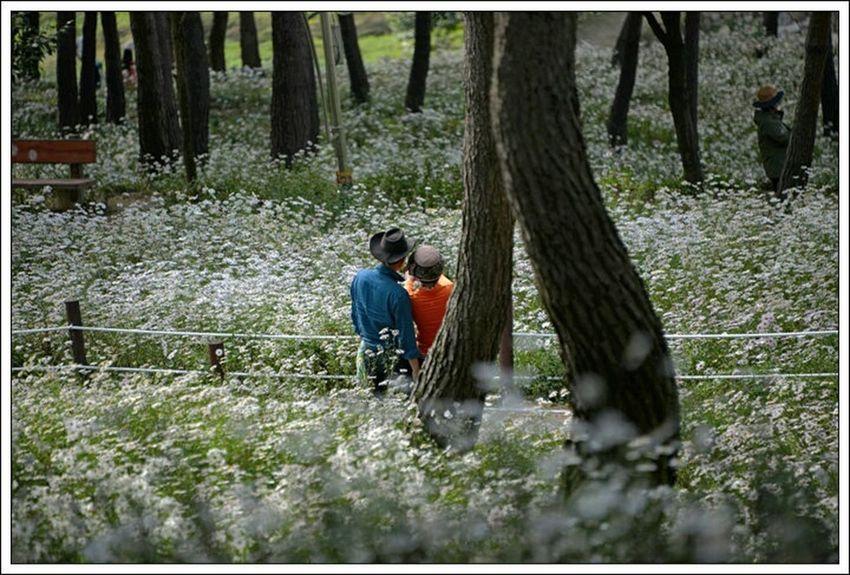 Lovers at the Siberian chrysanthemum park, Korea