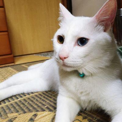 Cat Pet Home