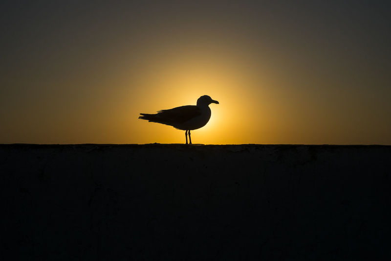 Silhouette of a lone bird in the sunset