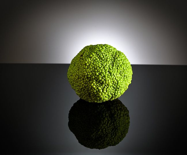 osage orange fruit not eaten by any current animals. Beauty In Nature Black Background Bodark Bois D'arc Botany Bow-wood Close-up Focus On Foreground Freshness Green Green Color Hedge Apple, Ho Horse Apple Horse Apple\ Mock Orange Monkey Balls No People Organic Studio Shot Vibrant Color White Background Yellow-wood