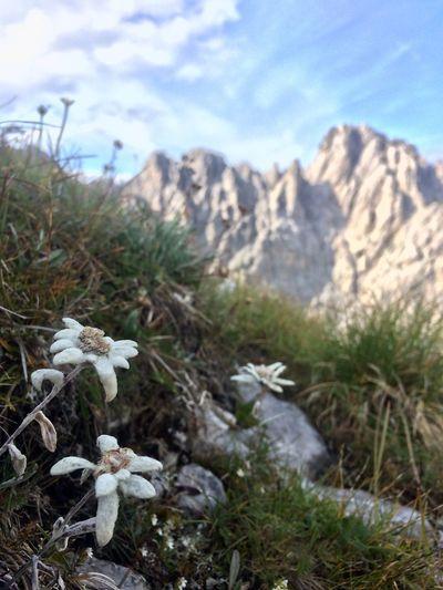 Stelle alpine
