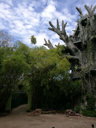 Tree Growth Nature No People Cloud - Sky Sky Outdoors Day Branch Architecture Beauty In Nature Show Elephant Show