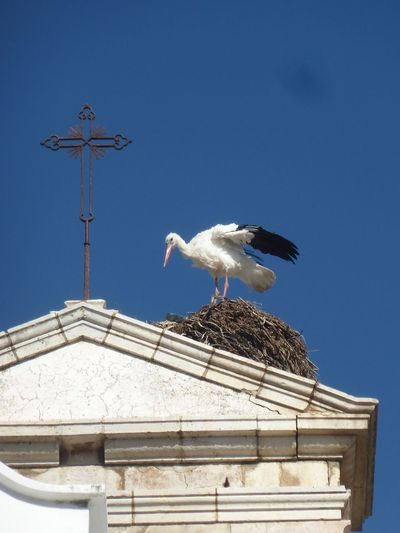 Low angle view of seagulls perching on a building