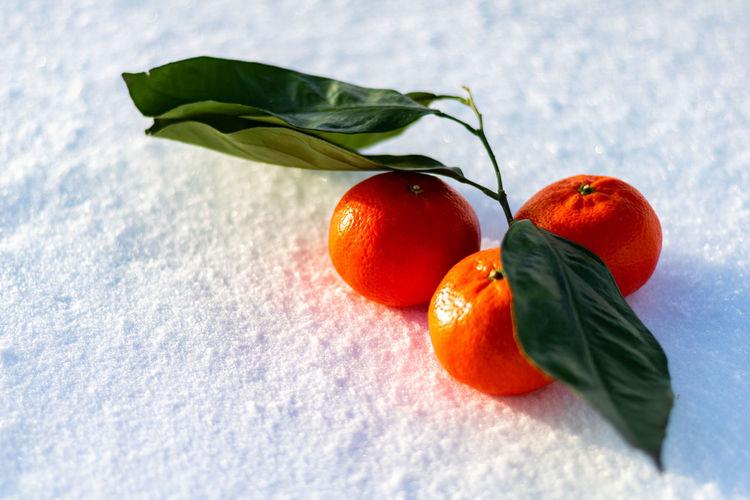 Tangerines in the snow