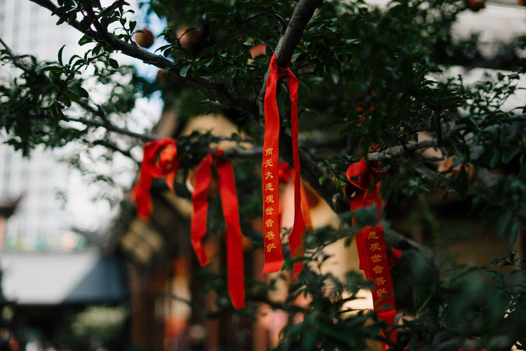 Close-up of ribbons hanging on tree