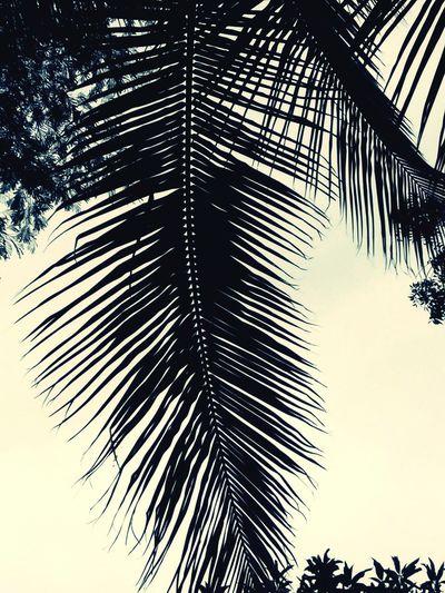 🌴Flickr Twitter Tumblr Foursquare EyeEm Gallery EyeEm Photography 🌴