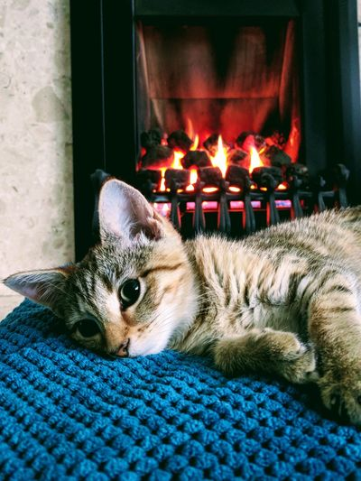 Close-up of cat resting by fireplace at home