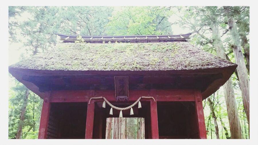 Togakushi Shrine Taking Photos Relaxing 戸隠神社