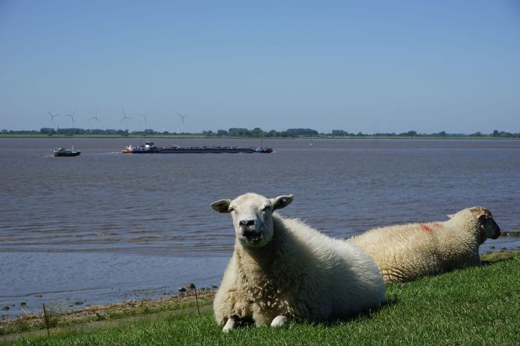 View of sheep on shore