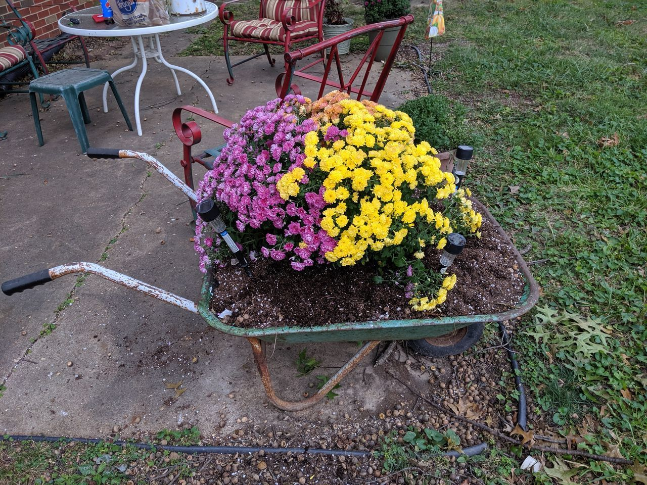 flower, flowering plant, plant, growth, freshness, fragility, nature, day, vulnerability, beauty in nature, high angle view, yellow, no people, outdoors, petal, potted plant, choice, variation, springtime, flower head, purple, flower pot, gardening