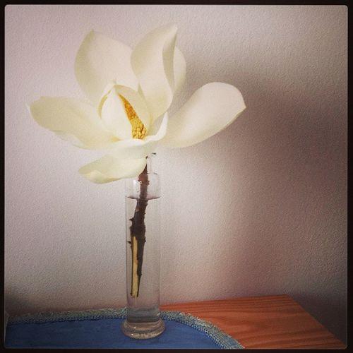 Fiori di magnolia, meglio di un profuma ambienti! :) Magnolia Fiori Studio Esami