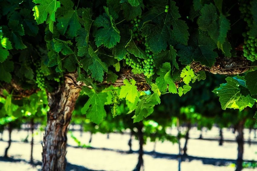 Check This Out Hanging Out Wine Tasting Relaxing TreePorn EyeEm Best Shots Wine Winery