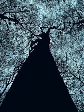 Welcome To Black Tree Silhouette Low Angle View No People Nature Outdoors Reedited Breathing Space Perspectives On Nature