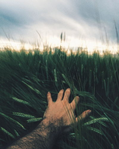 Close-up of hand on grass against sky