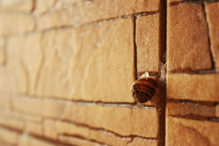 Close-up of insect on brick wall