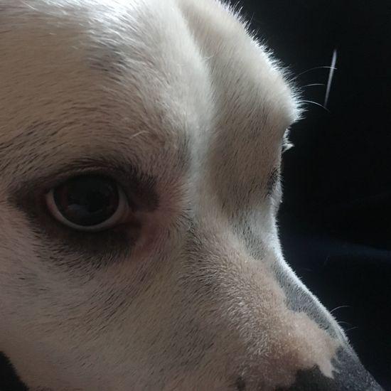 ROKKO One Animal Animal Themes Mammal Animal Domestic Animals Pets Domestic Close-up Animal Head  Animal Eye Eye Animal Body Part Hair Body Part Canine Dog