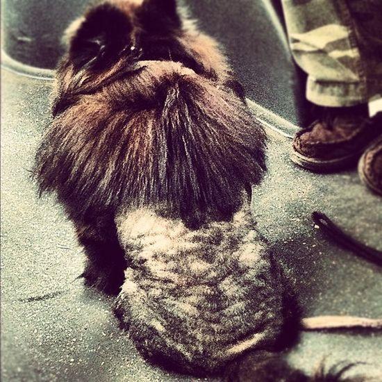 Dog Pet Mullet