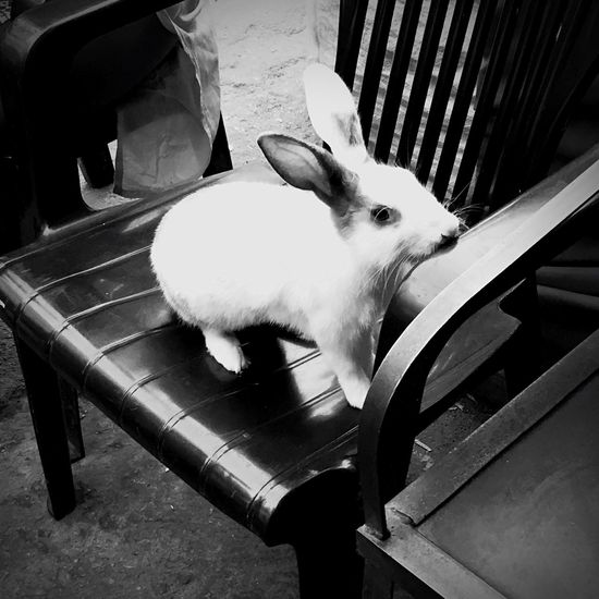 Rabbit 🐇 Cutenessoverload Playing With My Iphone Camera Trying To Hold On My Hand Soft Feeling Aww ❤ 😍😍 Killer Eyes