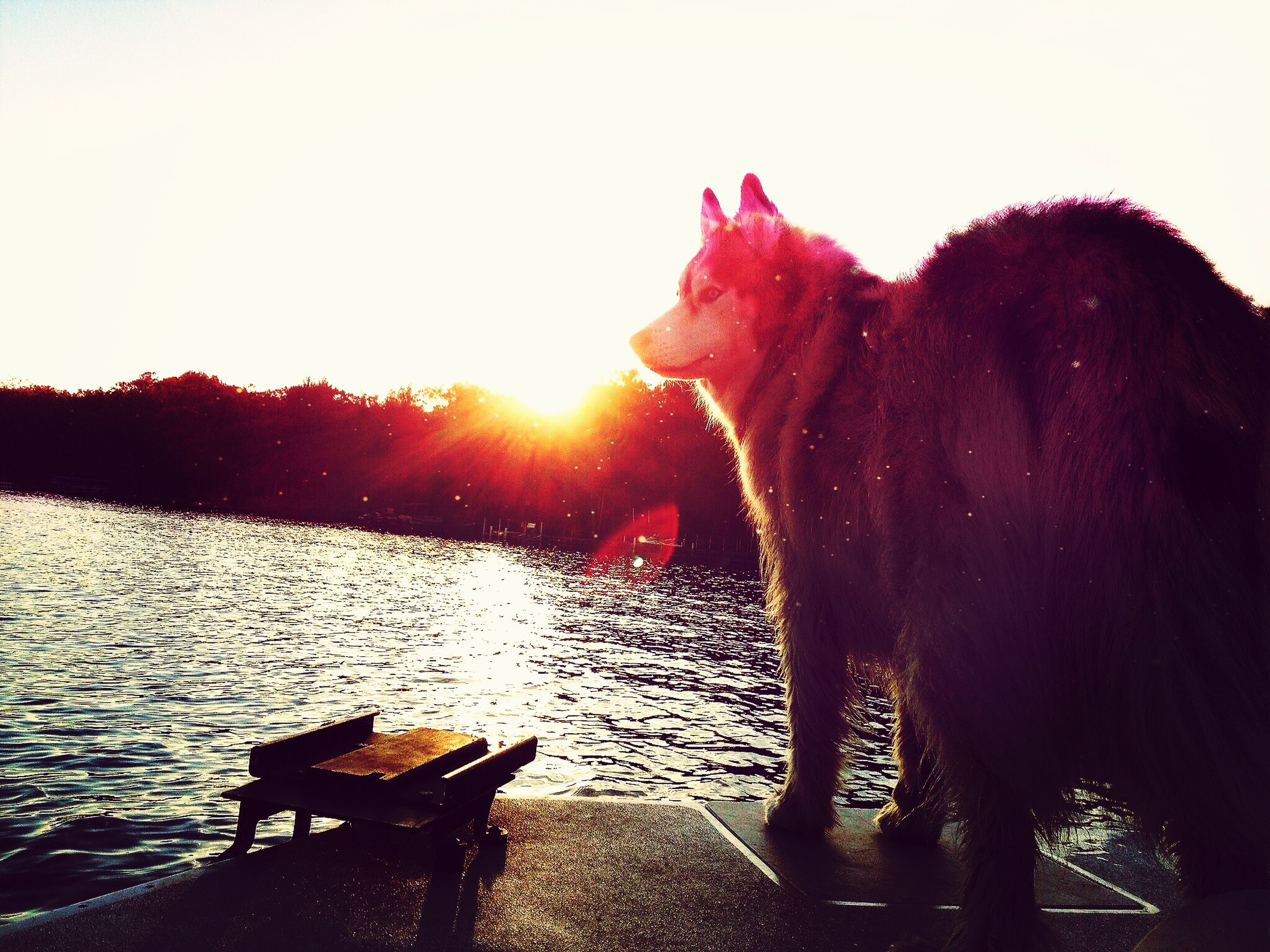 water, clear sky, sunlight, sun, domestic animals, sunset, animal themes, nature, one animal, red, lens flare, tranquility, mammal, outdoors, sunbeam, tranquil scene, wood - material, sky, beauty in nature, no people