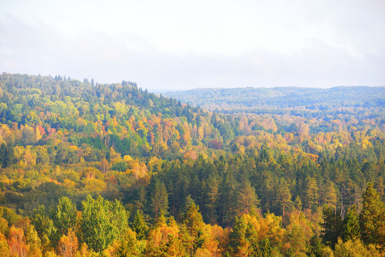 Scenic view of trees in forest against sky during autumn