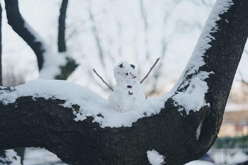 Snowman In Tree Against Sky