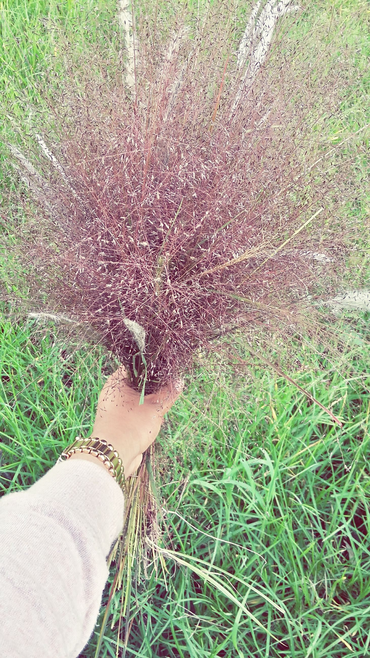 grass, low section, lifestyles, leisure activity, field, personal perspective, green color, part of, unrecognizable person, grassy, outdoors, day, nature, plant, growth, close-up, elevated view, tranquility
