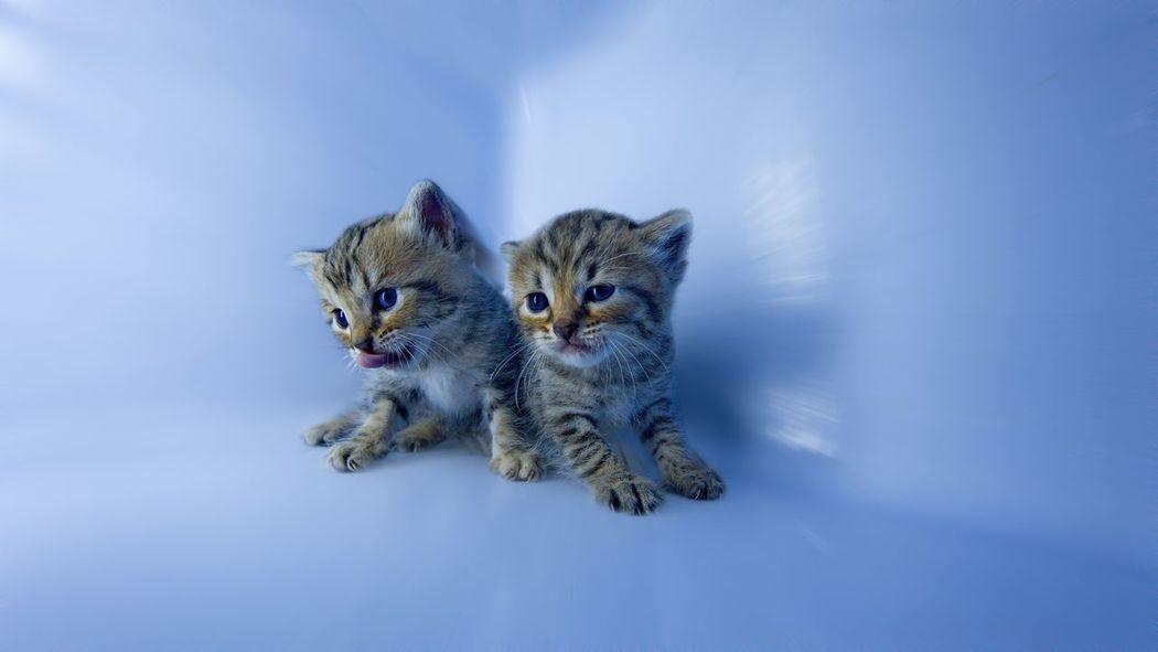 Cute Pets Kittens
