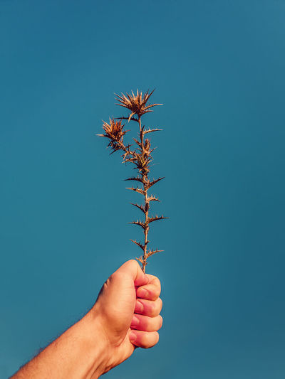 Hand holding plant against blue sky