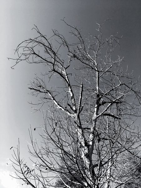 Bare Tree Branch Tree Nature No People Dead Plant Beauty In Nature Tranquility Outdoors Low Angle View Day Clear Sky Sky Dead Tree Bird