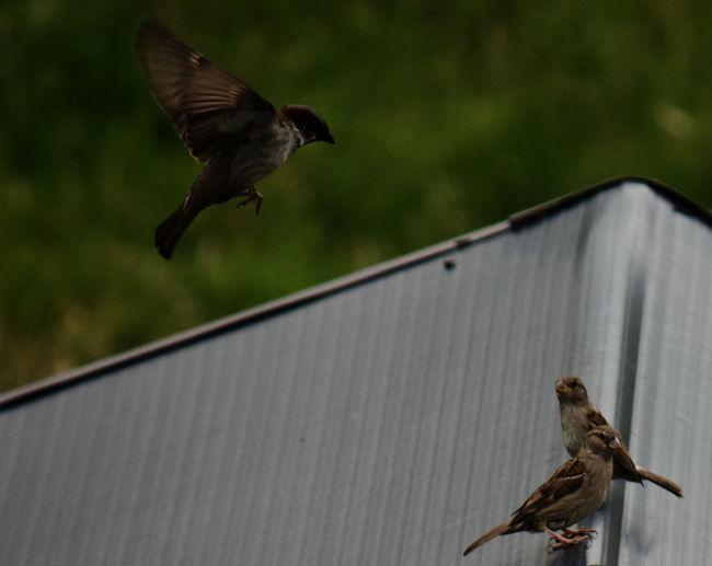 View of bird flying