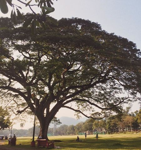 Still the best spot in elbi. Elbi Eye4photography  EyeEm Best Shots EyeEm Gallery EyeEm Nature Lover Freedom Park Nature Nature Photography Philippines Raintree UPLB