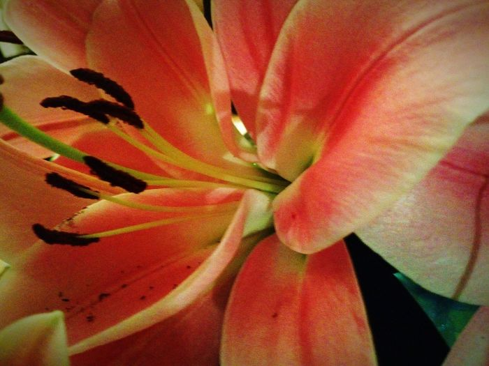 Lillies Beautiful Blooms Big Flowers Nature At Its Best Flowerporn Its a shame there's no smellivision, these babies have a stunning bouquet. My Favourite Flower