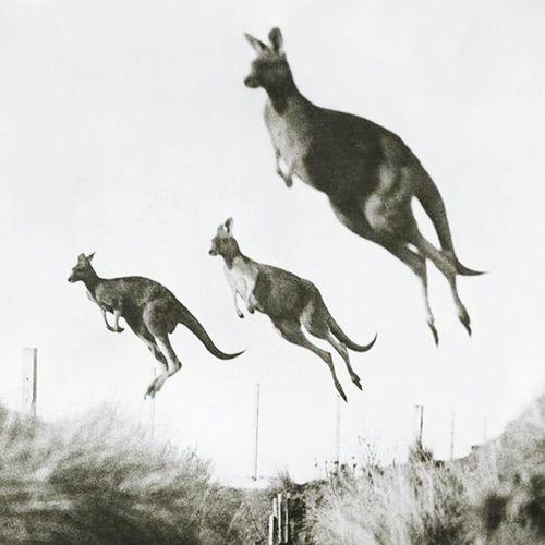 Jump Animals Taking Photos Monochrome Getting Inspired