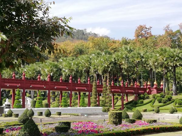 EyeEmNewHere Bridge - Man Made Structure Bridge Flowers #Chiang Mai Plants Thailand Plants And Flowers Plant Life Chiang Mai | Thailand Trees Tropical Climate Tree Flower Flowerbed Sky Grass Plant Green Color Topiary Garden Path Hedge Summer Exploratorium Visual Creativity