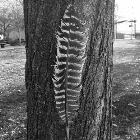 Interesting textures and patterns, couldn't resist! Enjoy. No Edit Outdoors Grass No People Close-up One Animal Field Growth Nature Day Tree Tree Trunk Feather  Blackandwhite Portrait Crafted Beauty