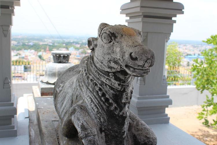 Pavala Kundru Cow Bull God Nandi Tiruvannamalai Tamil Nadu Tamilnadu Hinduism Hindu Devotional Temple Mountian