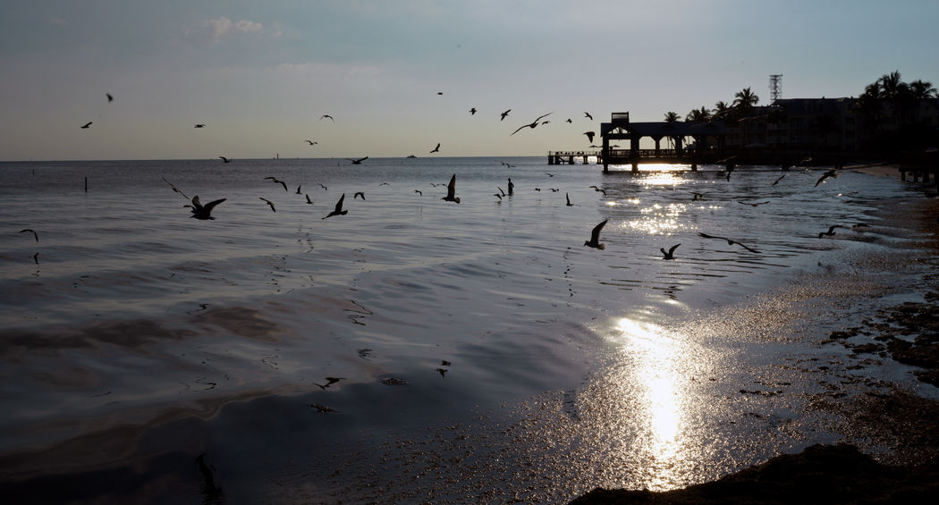 Sunset Scenics - Nature Flock Of Birds Beauty In Nature Outdoors Beach Large Group Of Animals Animal Wildlife Bird Water