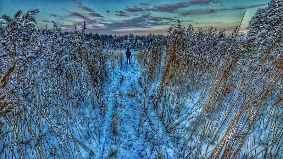 Winterwalk Walking In The Snow Cold Winter ❄⛄ Taking Photos Lake Showcase: January Followme The Following I Follow U Anywhere walk Frozen Reed Reeds At The Lake