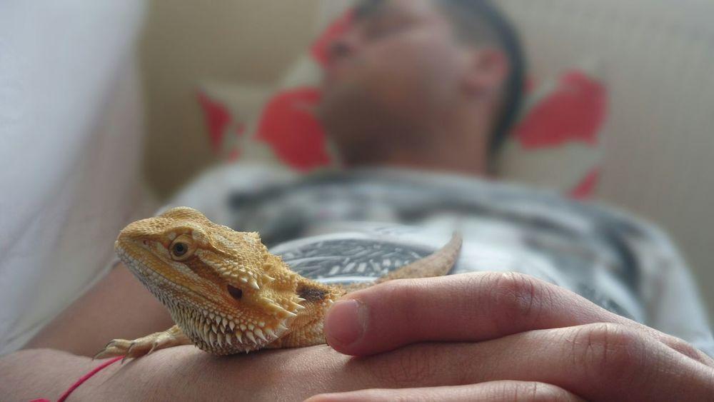 I Love My Pet Tetzuo Lizard