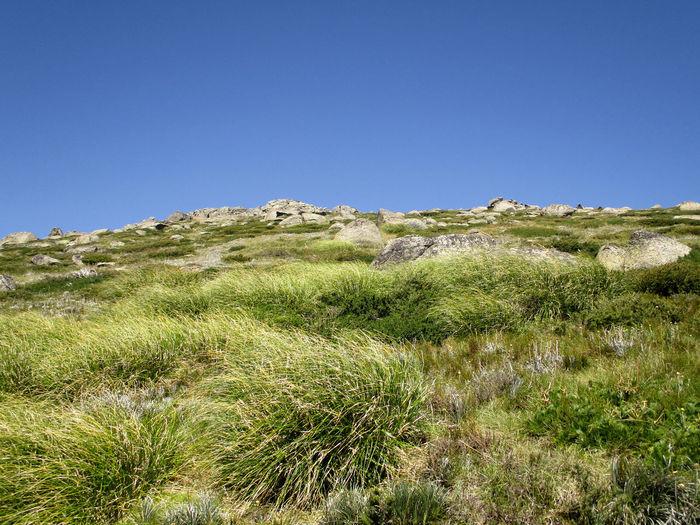 Sky Plant Grass