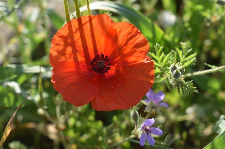 Printemps Fleur Flower